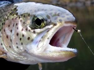 fishing 016-001