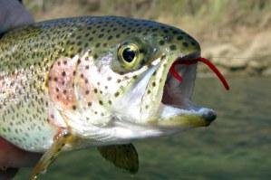 fishing 007-001