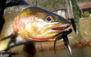 fishing norfork 006-001