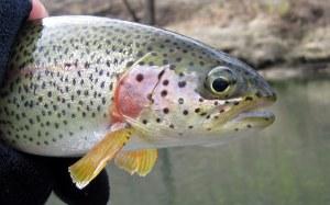 fishing 023-001