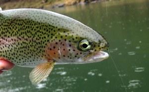 fishing 035-001